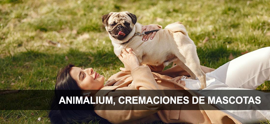 Cremaciones de mascotas 100% ecológicas